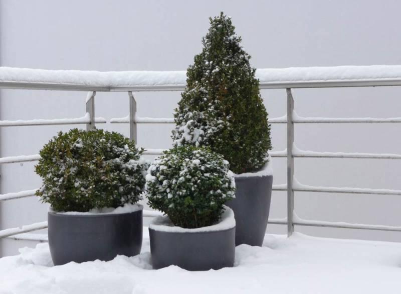 Blumenkübel Buchsbaum Bepflanzung im Winter