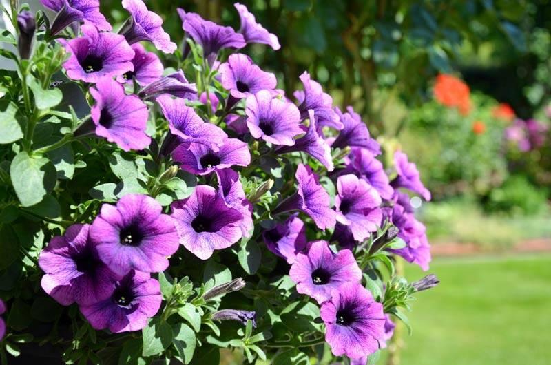Bestes Pflanzenwachstum
