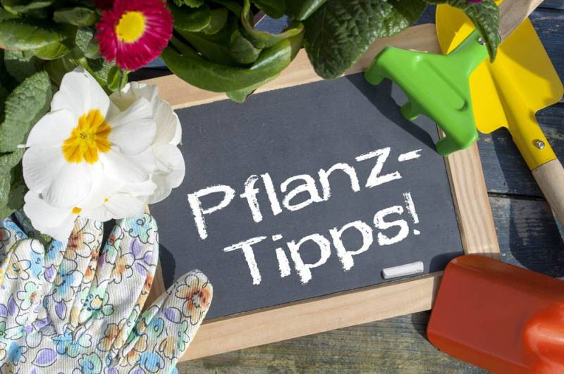Hentschke Gartenratgeber Pflanztipps